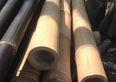 bambus_4