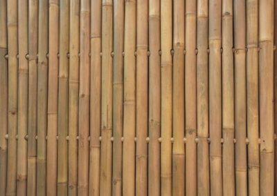 bambus_7
