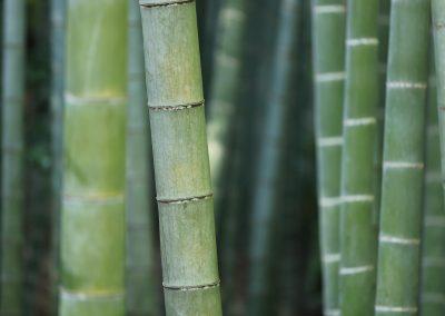 bambus_bg